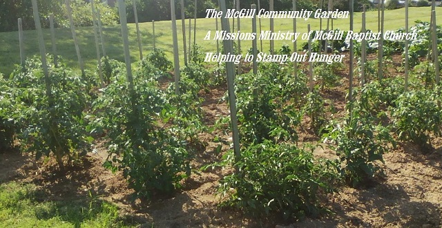 Produce from the McGill Community Garden helps feed the hungry at Cooperative Christian Ministry.