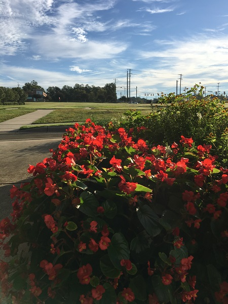 mcgill-flowers